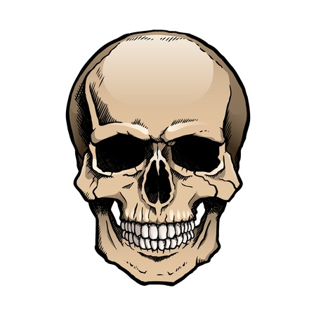 Colored human skull with a lower jaw. Vector