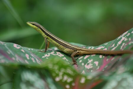 green lizards bask in the leaves at the curb photo