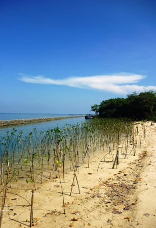 abrasion: mangroves as a marine nursery effort to cope with abrasion