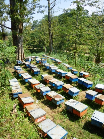 honey bee farm in the hills of the kapok tree, in Indonesia photo