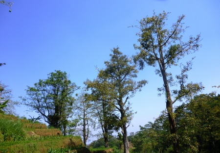 colo: kapok forest on hills colo,kudus, Indonesia Stock Photo