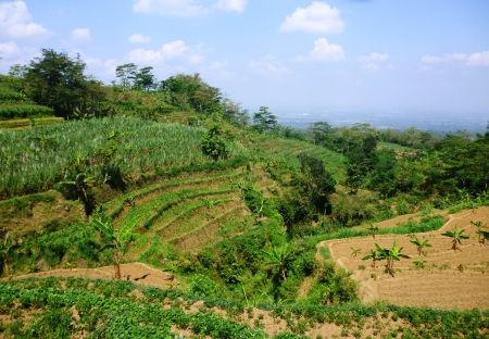 views of terraced fields on hills colo, Kudus, Indonesia photo