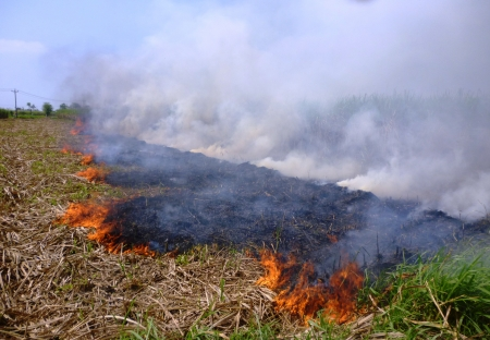 burning sugar cane fields after harvest in the region of Indonesia photo
