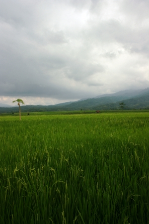 unspoiled landscapes and soothing in some places in Indonesia Stock Photo - 15916531