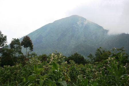 unspoiled: paisajes v�rgenes y suaves en algunas partes de Indonesia Foto de archivo
