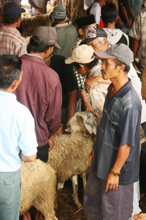 atmosphere in the goats and sheep market in Asia, Indonesia