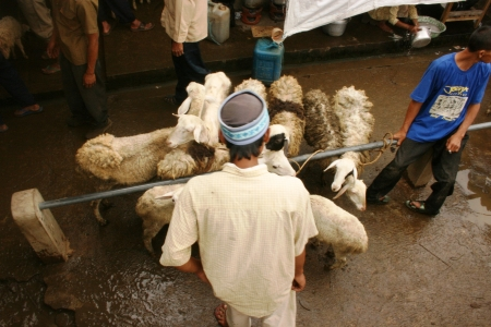 penned: atmosphere in the goats and sheep market in Asia, Indonesia Editorial