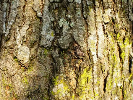 trees photography: Tree Bark Seamless Texture Tile with warm colour