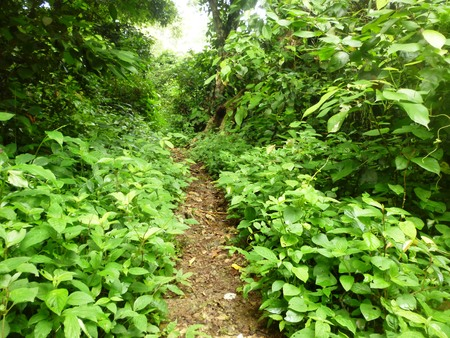 low section view: small road hiking excursion in woods, walking in a queue along a path. Low section view Stock Photo