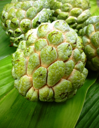 annona: Custard apple (Annona squamosa) on green background, Tropical fruit
