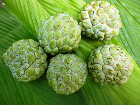 annona squamosa: Custard apple (Annona squamosa) on green background, Tropical fruit