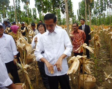 submitting: President Jokowi during a visit in Blora, corn harvest, central Java, Indonesia Editorial