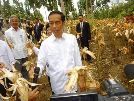 President Jokowi during a visit in Blora, corn harvest, central Java, Indonesia 新闻类图片