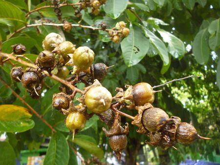 unidentified: Planta no identificado en indonesia