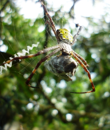 weave ball: Spider and web