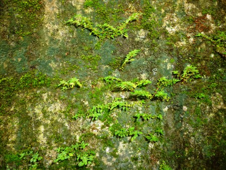 gray texture background: seamless moss old green wall stone pattern mold gray texture background rock brick fungus