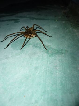 eight legs: spider on the young blue Wall