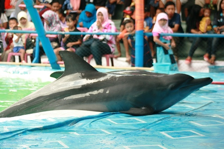 perform: the most famous animal attraction in Blora. Dolphin show pool is large and full visitor Editorial