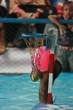 atracci�n: la atracci�n m�s famosa de los animales en Blora. Espect�culo de delfines piscina es grande y lleno de visitantes Editorial