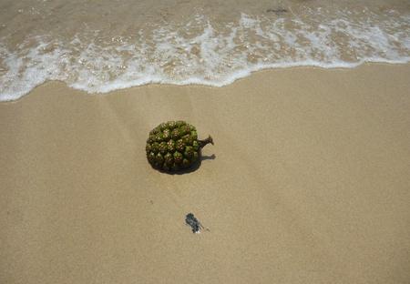 unidentified: Fruta no identificada Stranded