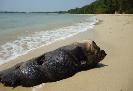 stranded: Stranded coconut wood