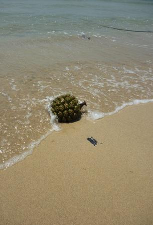 stranded: Stranded unidentified fruit