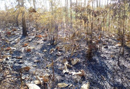 residual: residual forest fires after burning