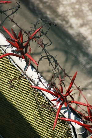 detail of barbed wire Stock Photo