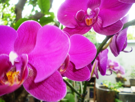 orchid branch: orchid branch with violet flowers