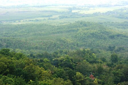 holz: nature view from Jati Pohon located in Grobogan district, Central Java