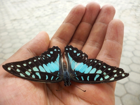 deadly: Hands holding colourful deadly butterfly