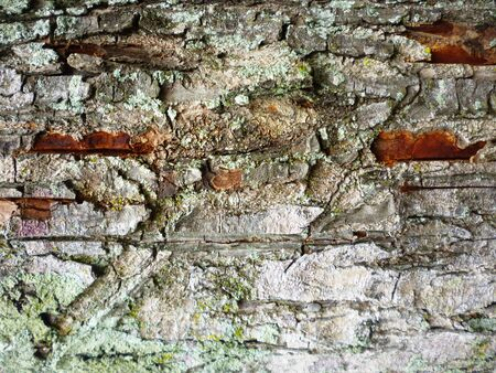 detailed view: Detailed view of old tree bark texture