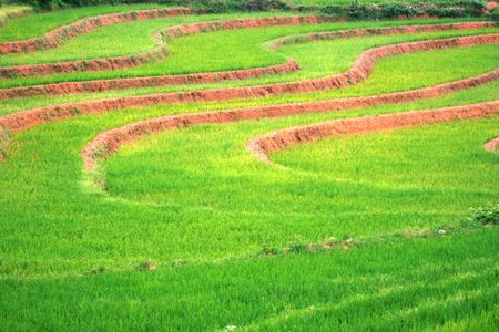 paddies: A farm on Blora of the rice paddies are visible good in central java, Indonesia