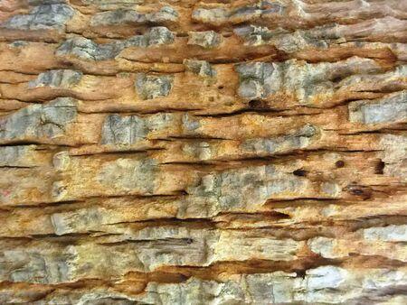 ribbed: ribbed texture of tree bark