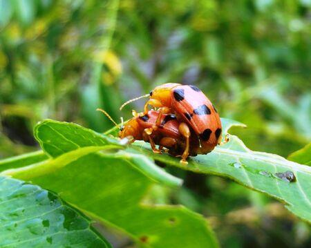 bug's: Stink bugs