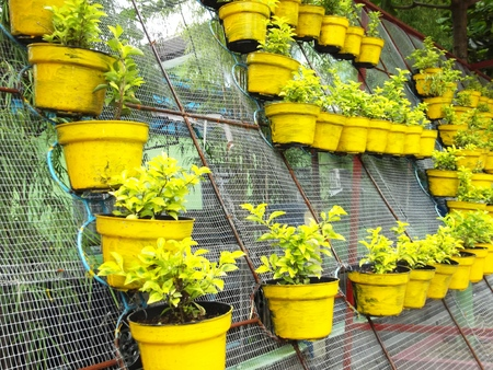 in lined: yellow potted flowers lined