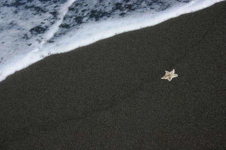 sea star: sea star on sand