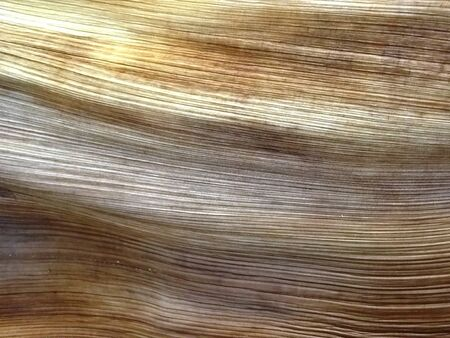 palm frond: An abstract closeup of a section of a wooden palm frond with a linear texture