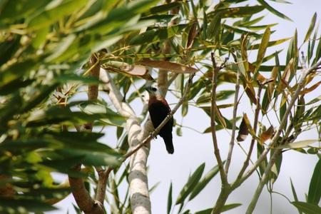 plaintive: bird sitting on branch Stock Photo