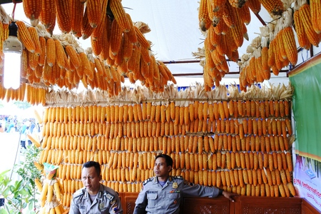 stockman: Blora -November 10 : Visitors admiring vegetable on display during Blora food and agriculture exhibition on November 10, 2016 in Blora, central Java, Indonesia.