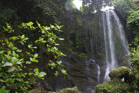 Waterfall in a lush rainforest. Photographed at the Pasucen Falls in Rembang, Indonesia