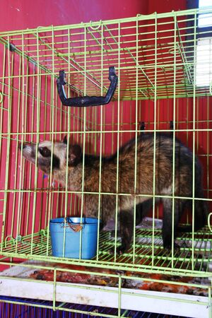 Mongoose in a cage