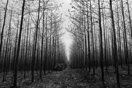 teak tree as far as the eye can see Reklamní fotografie - 124701684