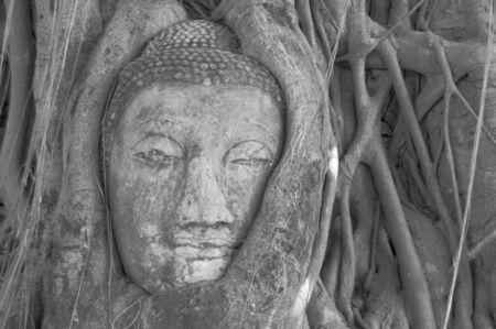 The root system of a tree have completely enveloped a statue of the Buddha in Ayutthaya photo