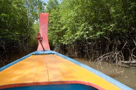 ventures: Colourful boat ventures into a mangrove swamp