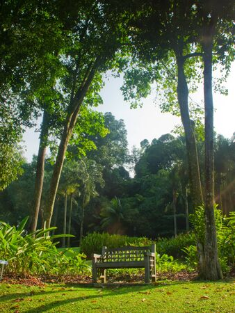 A lonely rest spot in the middle of the botanic gardens.