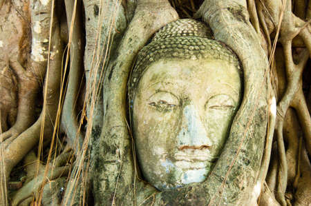 strangler: The face of Buddha emerges from a Bodhi Tree.