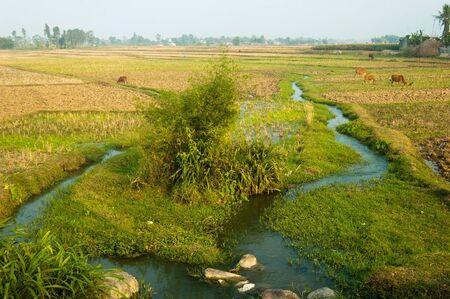 A stream irrigates the Vietnamese farmland for rice cultivation. Banco de Imagens