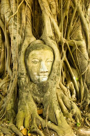 enveloped: The root system of a tree have completely enveloped a statue of the Buddha in Ayutthaya