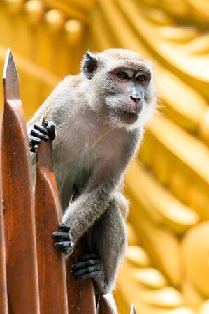 mischevious: A monkey perches on the staircase at Batu Caves in Malaysia.